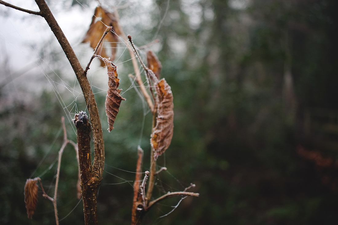 Christina-Clare Photography | Bridgnorth Photographer