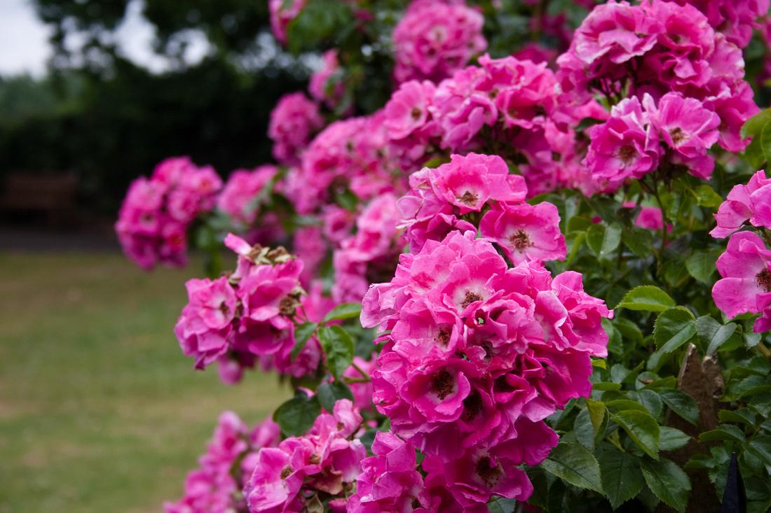 Bridgnorth Castle Garden