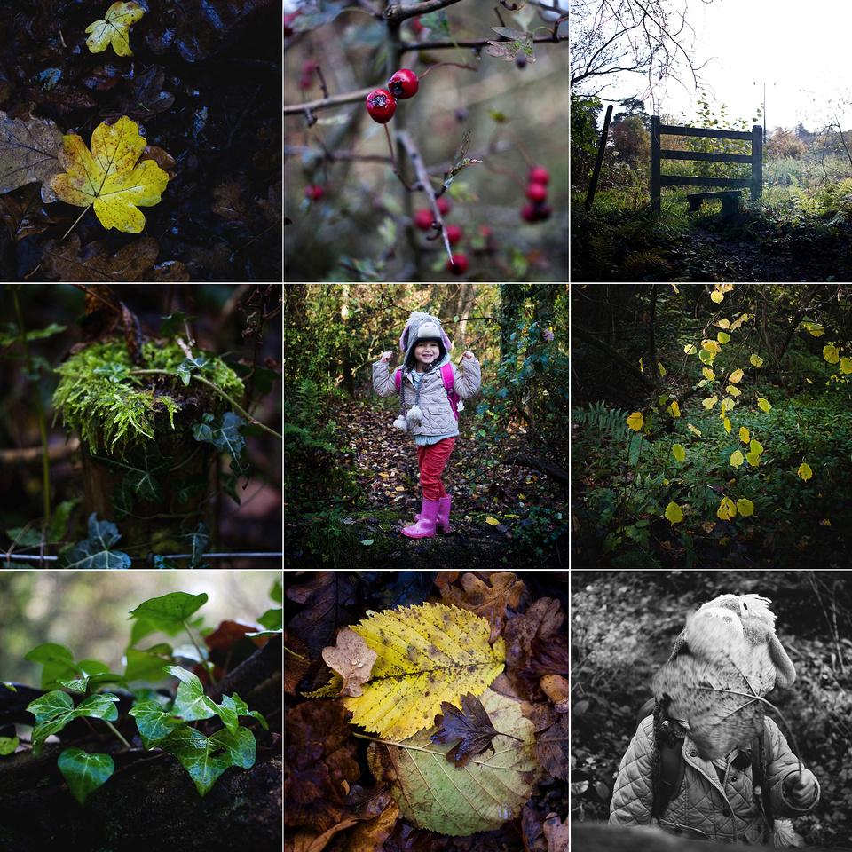 woods blog