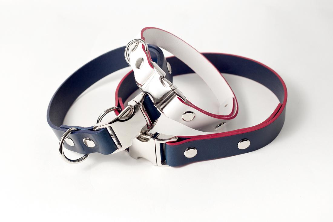 032018 dog and collar blog (2)