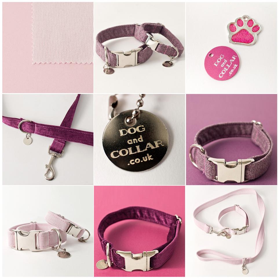dog and collar blog